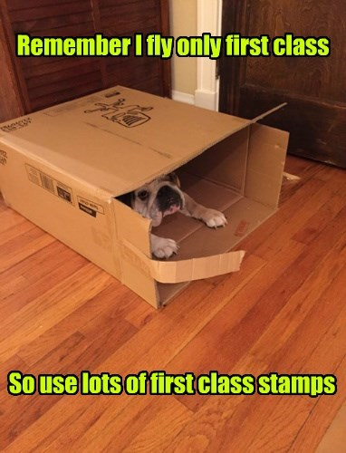 dogs bulldog if i fits i sits Travel - 8385833216