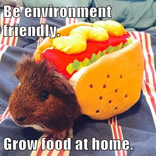 animals costume hot dog guinea pig - 8385842176