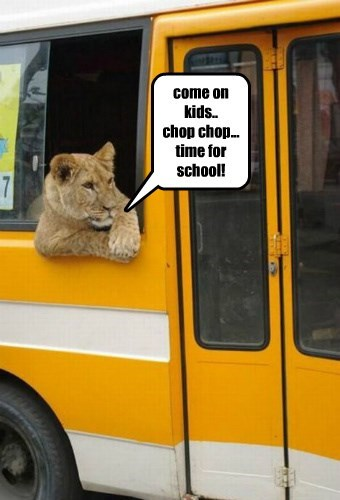 nope Cats bus - 8385968640
