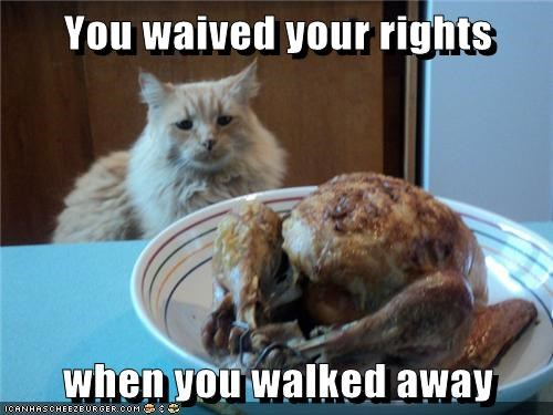 animals dibs thanksgiving Cats