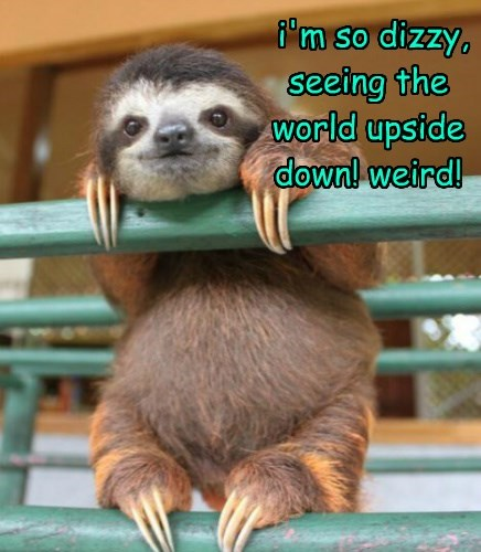 sloths weird upside down
