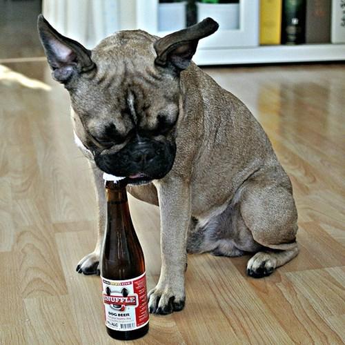 beer dogs bottle opener funny - 8386166784