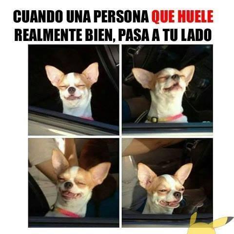 bromas perros Memes animales - 8386261248