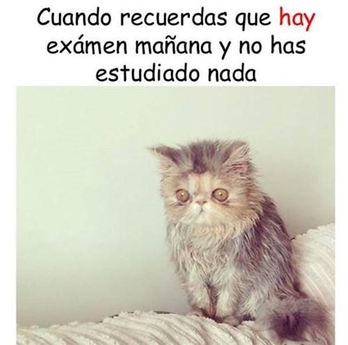 gatos bromas Memes animales - 8386271744