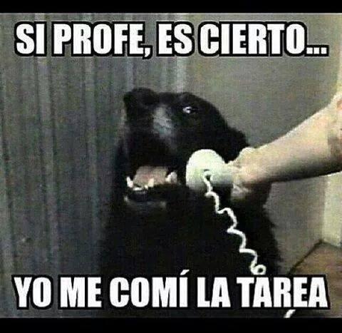 bromas perros Memes - 8386286336