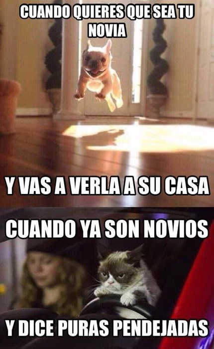 perros Memes animales - 8386288128