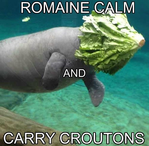 manatee,puns,keep calm,salad
