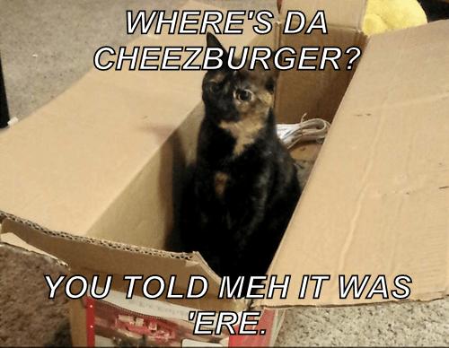 Cheezburger Image 8386647808