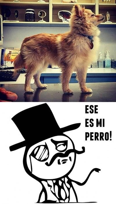bromas perros Memes animales - 8386861824