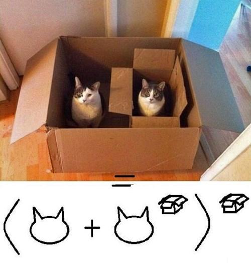 gatos bromas curiosidades animales fotos - 8386921472