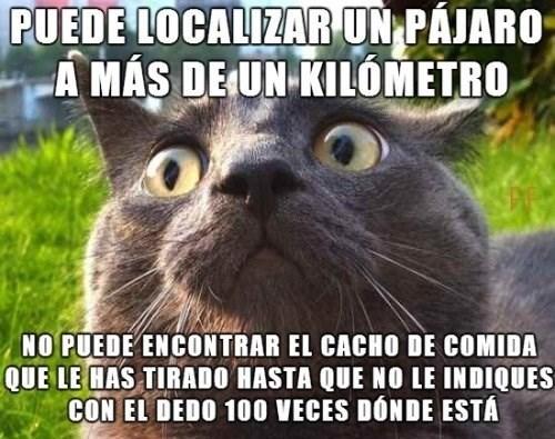 gatos bromas Memes animales - 8386930432