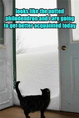 snow bathroom winter Cats - 8386968576