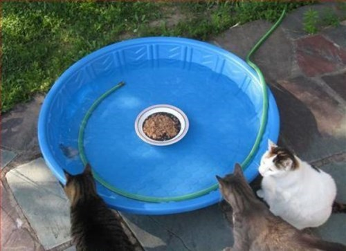 gatos bromas animales fotos - 8386974208