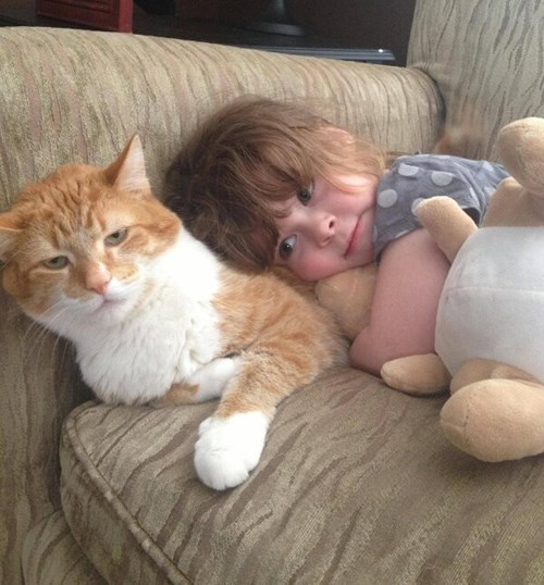 kids expression parenting not amused cuddling Cats - 8386990848