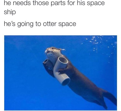 twitter puns cute otter failbook g rated - 8387139328