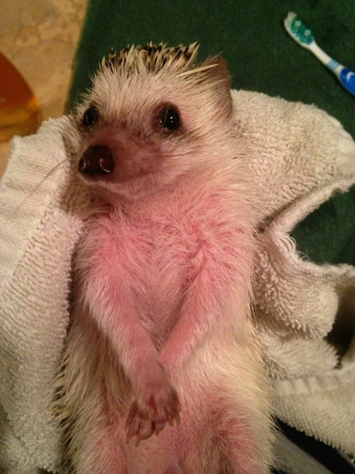 bath cute hedgehog - 8387217920