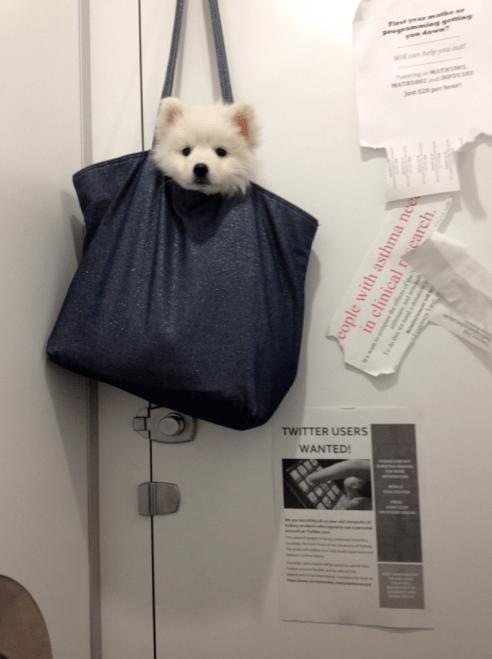 dogs bag puppy cute - 8387219968