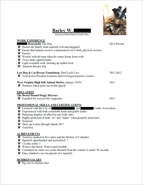 dogs,resume