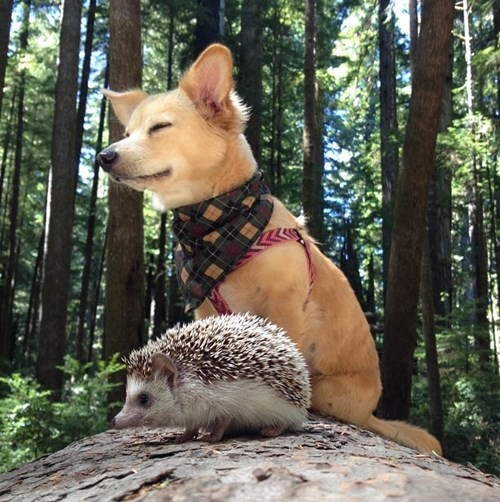 dogs,puppy,BFFs,cute,hedgehog