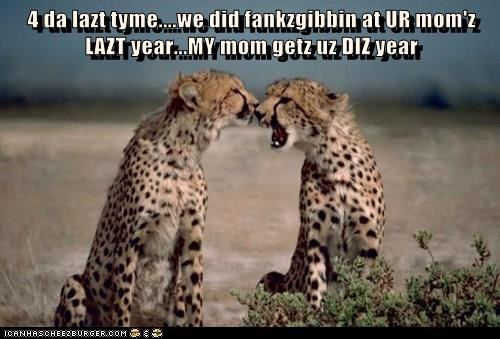animals leopard thanksgiving fight Cats - 8387255552