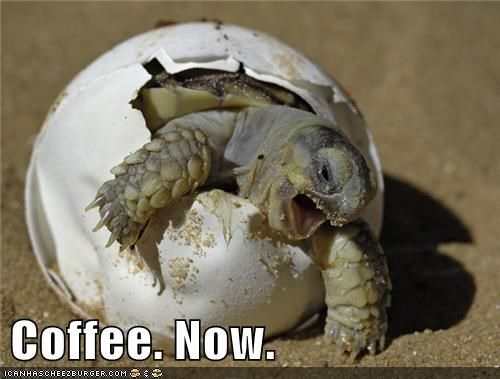 baby animals,coffee,turtle,squee