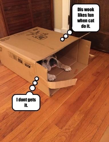 dogs box bulldog if i fits i sits - 8387495424