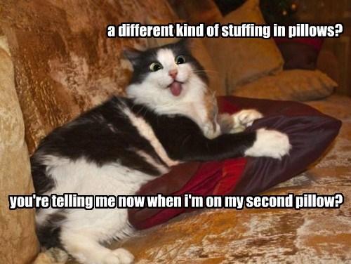 Pillow gross Cats
