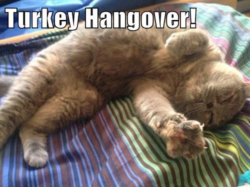 animals thanksgiving Turkey hangover Cats - 8387768064