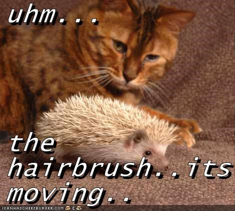 animals brush hedgehog Cats magic