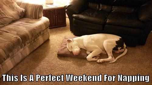 animals dogs nap thanksgiving - 8388104448