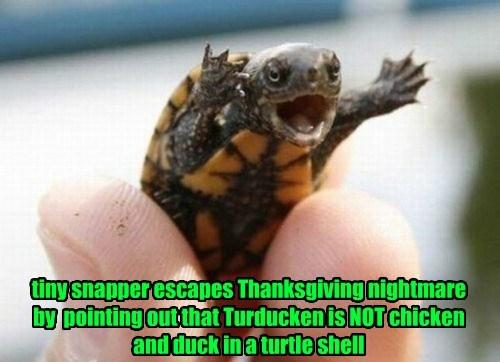 duck chicken thanksgiving turtle - 8388200704