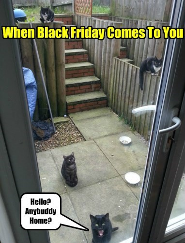 When Black Friday Comes To You Lolcats Lol Cat Memes Funny Cats Funny Cat Pictures With Words On Them Funny Pictures Lol Cat Memes Lol Cats