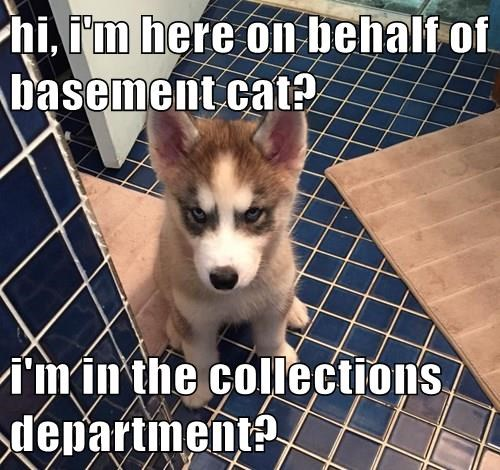 basement cat,dogs,minion,puppy,husky