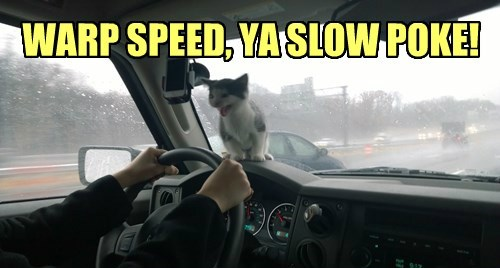 car driving Cats