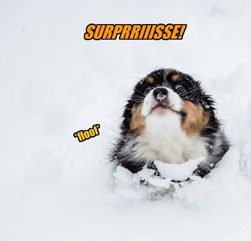 dogs snow surprise puppy