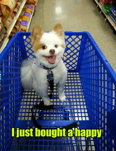 dogs happy shopping puppy sale smile