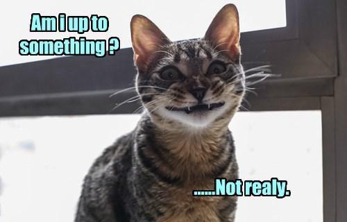 whatcha doin,mischief,Cats