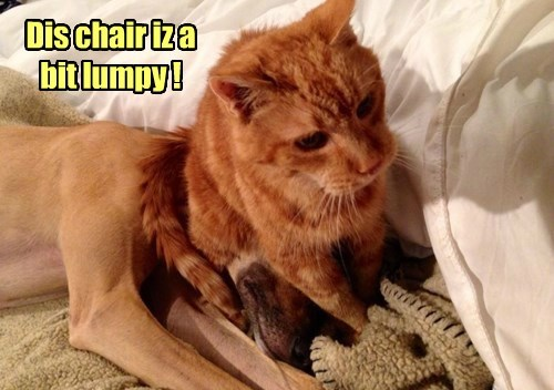 tabby chair dogs Cats - 8389728000