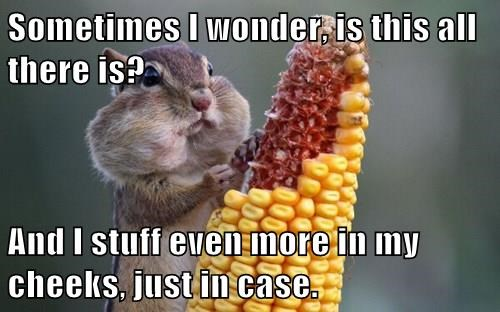 animals corn squirrel stuffed noms existentialism - 8389730816