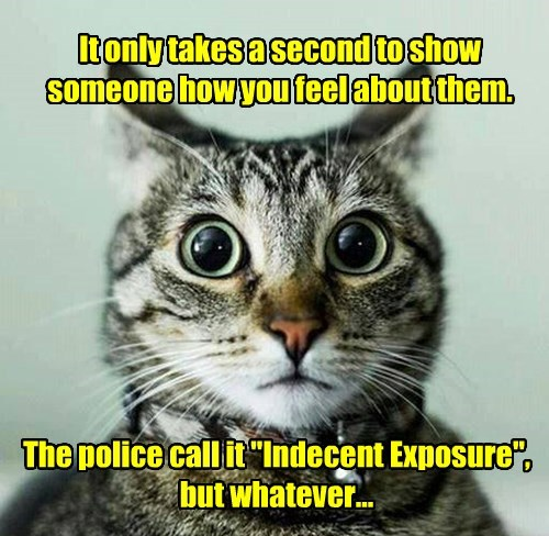 feelings,indecent exposure,Cats