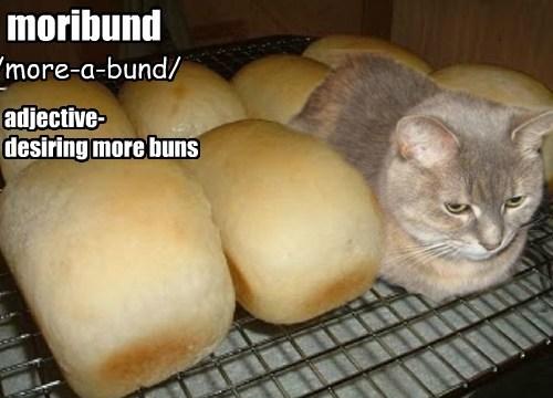 Cheezburger Image 8390047232