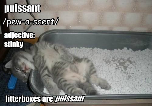 puissant /pew-a-scent/ adjective: stinky litterboxes are puissant