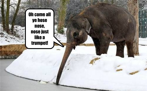 Oh come all ye hose nose, nose just like a trumpet!