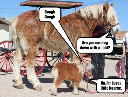 pun cold miniature horse