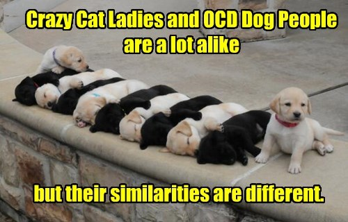 Crazy Cat Ladies and OCD Dog People are a lot alike but their similarities are different.