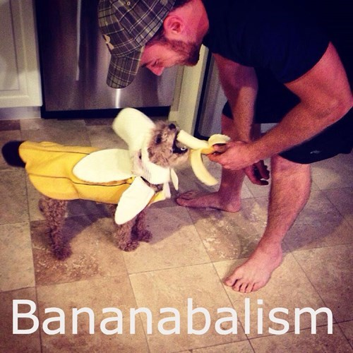 costume,dogs,cannibalism,banana