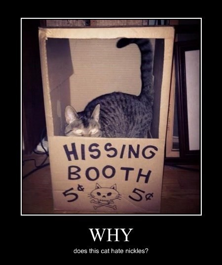 kissing booth,nickles,Cats,funny,hissing
