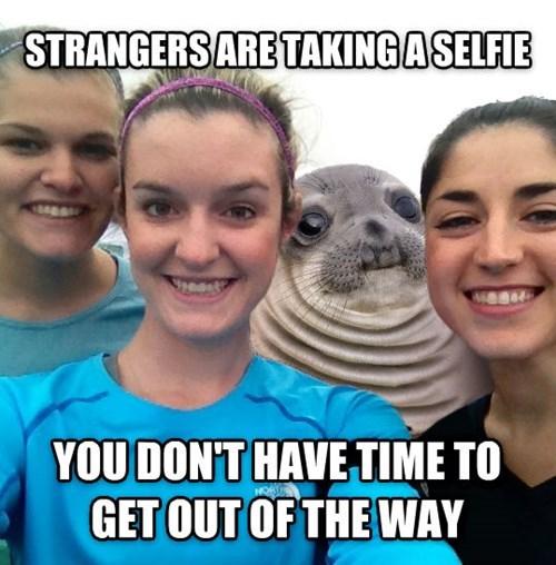 awkward seal selfie - 8391168768