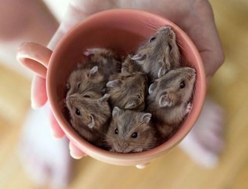 cute,cupcakes,mice