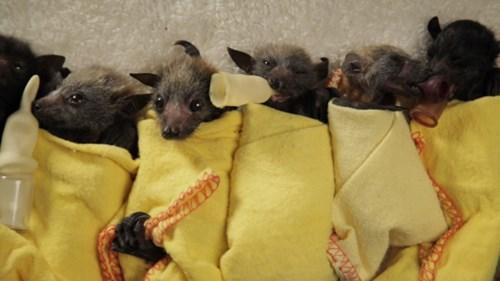 blankets cute bats zoo - 8391194368